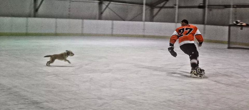 ice hockey dog warriors